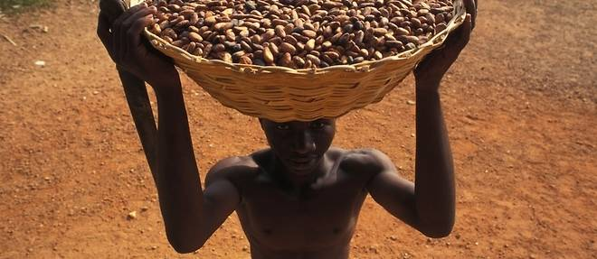 Afrique : cacao équitable cherche consommateurs désespérément