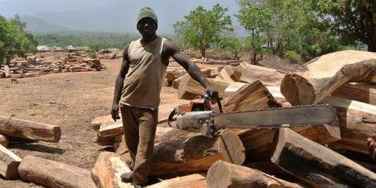 « Kosso Connection » : comment les Chinois vident les savanes africaines de leurs bois précieux