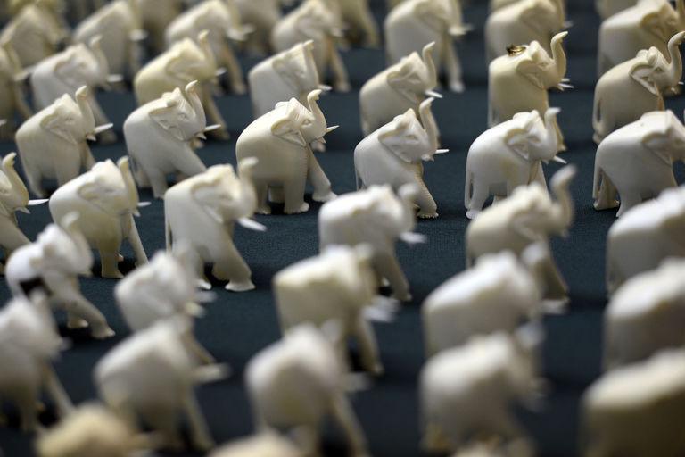 L'« or blanc », une plaie au cœur de la Chinafrique