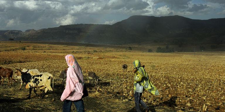 En Ethiopie, le développement rural passe par l'emprisonnement